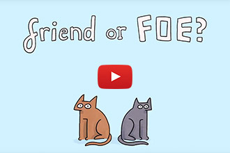 Friend or Foe: Do Your Cats Actually Get Along?