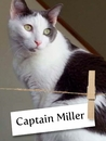 From Homeless To Loved, Captain Miller Is One Sweet Cat!