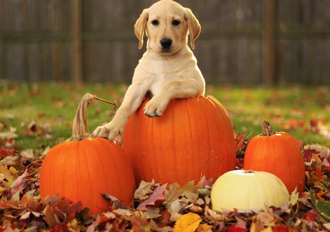 Fun Fall Festivities With Your Four Legged Friend