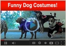 Funny Dog Costumes for Halloween!