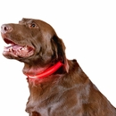 Furhaven LED Safety Pet Collar - Red (Extra Large)