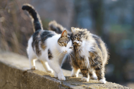 Getting Territorial: How to Stop Your Cat from Spraying