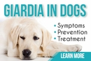 Giardia in Dogs | Prevention, Symptoms, & Treatments