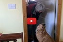 Golden Retriever Hilariously Refuses to Give His Mom a Kiss!