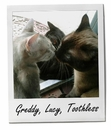 Greddy, Lucy, Toothless 12/15/14