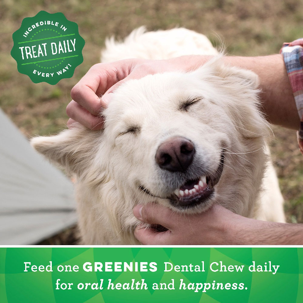GREENIES-GRAIN-FREE-TREAT-PAK-TEENIE-12-OZ