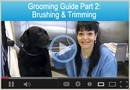 Grooming Guide: Brushing, Trimming & Positioning