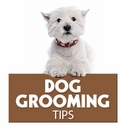 Grooming Your Dog