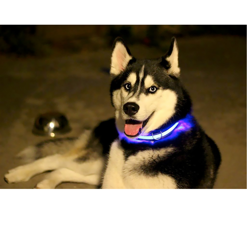 HALO-MINI-LED-SAFETY-DOG-COLLAR-RED-SMALL