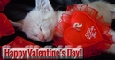 Pet Valentine's Day Store: Dog & Cat Toys, Treats, Supplies