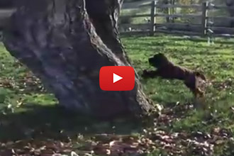 Has Anyone Ever Seen A Real Cat-Dog? We Think We Found Him!