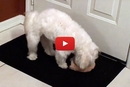 Have You Ever Seen A Dog Get THIS Excited Over A Squeaky Toy?