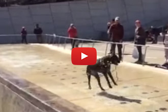 Have You Ever Seen A Dog Have This Much Fun In A Fountain?