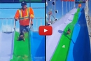 Have You Ever Seen A Yorkie Who Loves Slides?