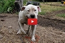 He Was Chained Up Outside A Trailer Park, Then His Rescuers Came!