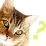 Health Quiz for Cats