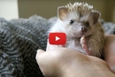Here's To A Day In The Life Of A Hedgehog!