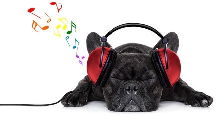 How Does Music Affect your Dog