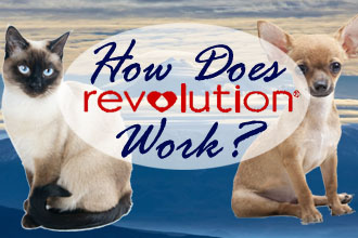 How Does Revolution Work?