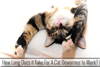 How Long Does it Take for A Cat Dewormer to Work?
