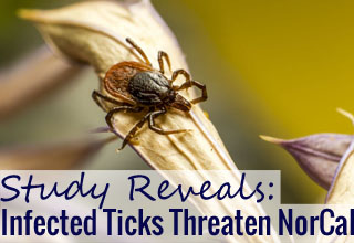 How Ticks Are Even More Dangerous Than You Think