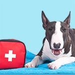 How To Assemble Your Pet's First Aid Kit