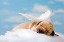 How To Help Children Mourn The Loss Of A Pet