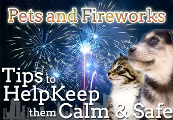 How To Help Pets Cope With Fireworks