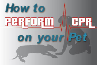 How to Perform CPR on Your Pet