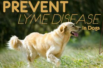 How to Prevent Lyme Disease in Dogs