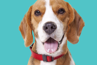 How to Recognize and Treat Skin Infections in Dogs