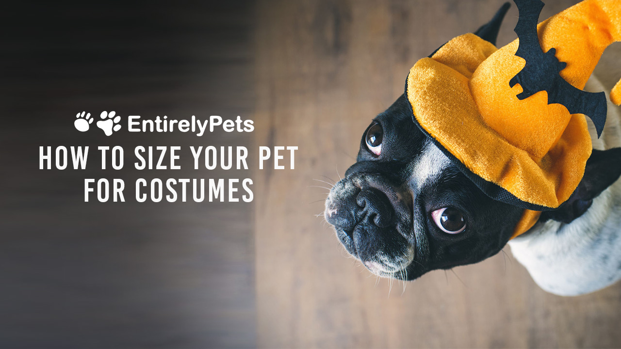 How to Size Your Dog For Halloween
