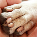 How To Soothe Your Dog's Sore Paws