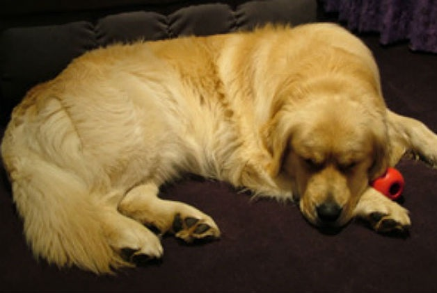 How To Take Care Of An Arthritic Dog In Winter
