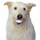 Humunga Chomp Teeth Ball - One Size