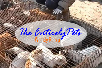 Hundreds of Cats Saved from China's Fur and Meat Trade, Dog Survives 15-Story Fall, and Antioch Struggles to Reduce Feral Population- This & More in This Week's EntirelyPets Weekly Recap