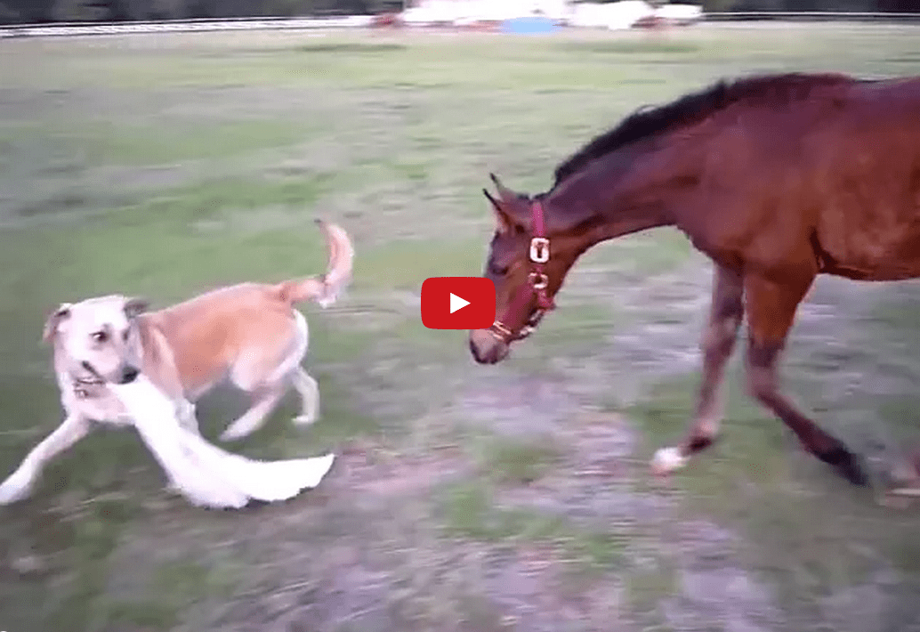I've Never Seen a Dog and Horse Play Like This Before! Too Cool!!
