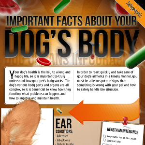 Important Facts About Your Dog's Body