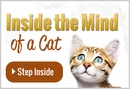 Inside the Minds of Cats