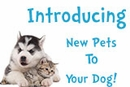 Introducing New Pets To Your Dog