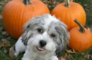 Is Pumpkin Safe for Dogs and Cats? How Much Can I Give Them?