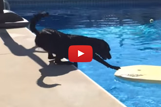 It Might Be Summer, But This Is One Lab Who Doesn't Want To Get In The Pool!