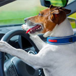 Keep Your Dog Safe From Summer Heat