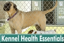 Kennel Health Essentials: Everything You Need to Know Before Boarding Your Pet