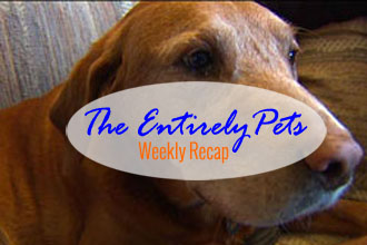 Lawsuits, Good Dogs & Memories: The EntirelyPets Weekly Recap (February 7-13, 2015)