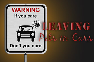 Leaving Pets in Cars: If You Care- Don't You Dare!