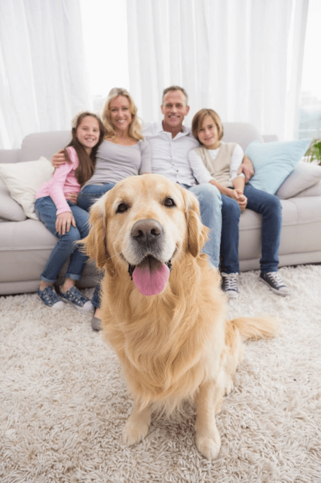 Major Stores That Allow Dogs Inside (Pet-Friendly Policies)
