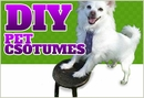 Make Your Own Pet Costume