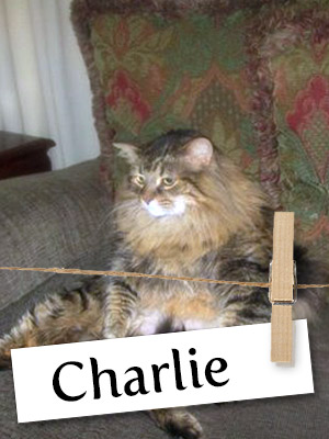 Meet Charlie: The Rescue Cat With A Troubled Past