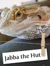 Meet Jabba, The Rescue Lizard!